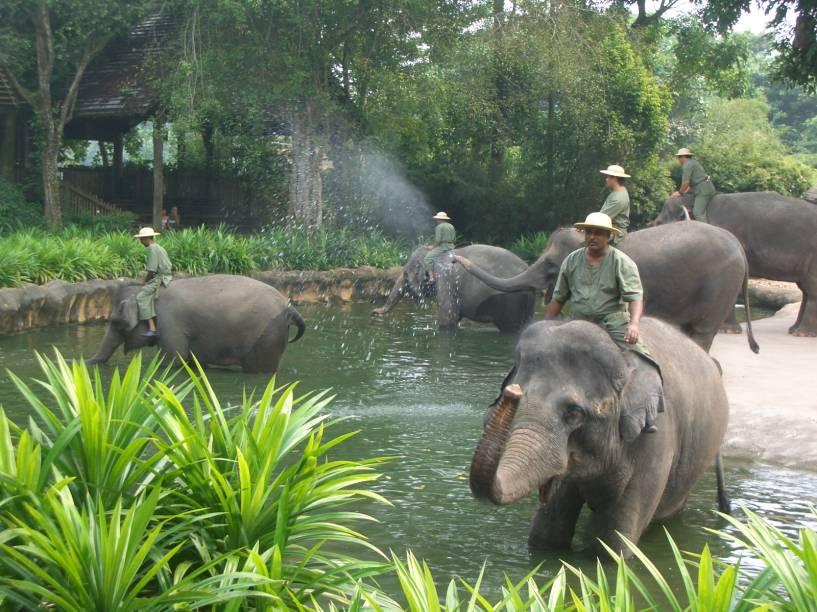 """<strong>Zoológico de Cingapura</strong>No Zoológico de <a href=""""http://viajeaqui.abril.com.br/paises/cingapura"""" rel=""""Cingapura"""" target=""""_self"""">Cingapura</a> os animais são mantidos fora das jaulas, em ambientes que simulam seus ecossistemas de origem. As barreiras que separam os bichos dos humanos estão disfarçadas de cachoeiras, fossos ou plantas. Algumas espécies convivem nos mesmos espaços, coexistindo como se estivessem em seu habitat natural. Shows temáticos acontecem diariamente, e os visitantes podem tirar fotos com macacos e andar em camelos ou <a href=""""http://viajeaqui.abril.com.br/materias/fotos-de-animais-ameacados-de-extincao?foto=6#6"""" rel=""""elefantes"""" target=""""_self"""">elefantes</a> (<em>foto</em>)"""