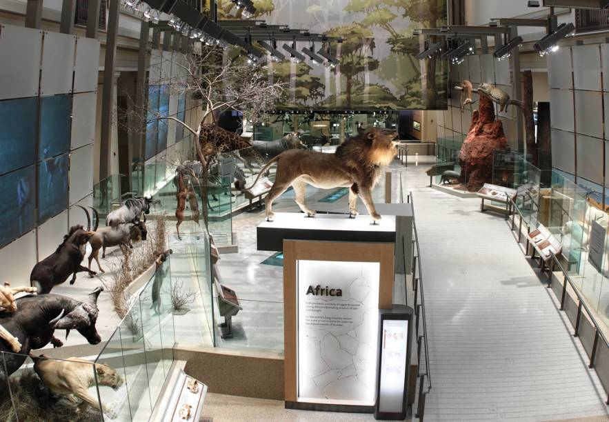 Departamento de mamíferos do Museu de História Natural do Instituto Smithsonian