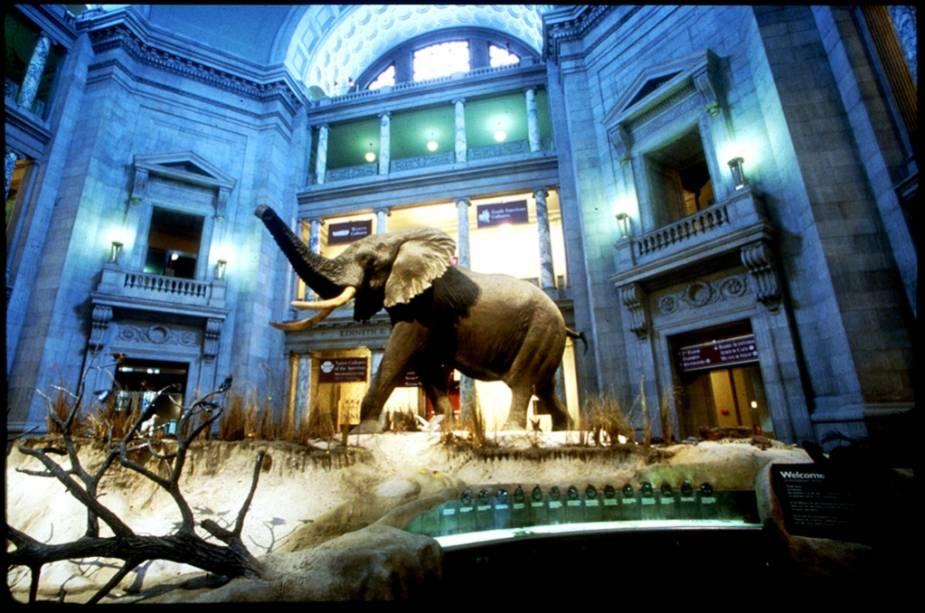 O museu conta com vários animais expostos em tamanho natural