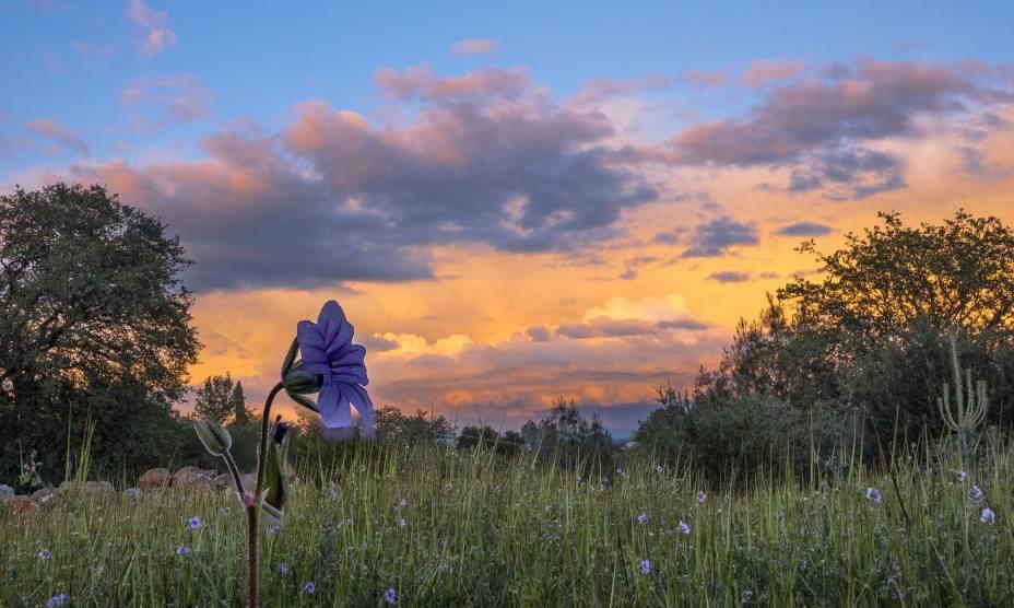 """Flores no pôr do Sol da cidade de Redding, na Califórnia, <a href=""""http://viajeaqui.abril.com.br/paises/estados-unidos"""" rel=""""EUA"""" target=""""_self"""">EUA</a>"""