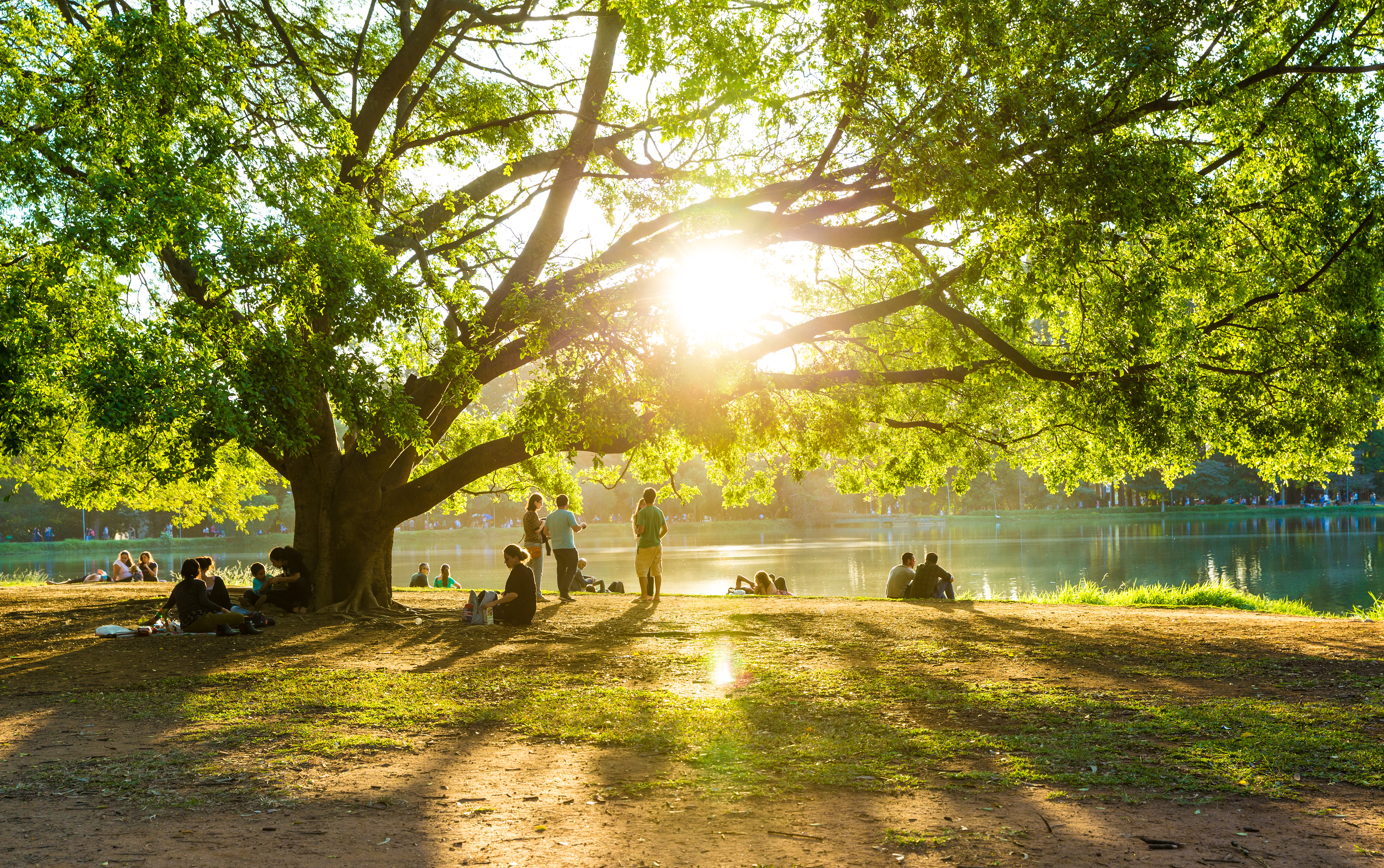 Pessoas descansam na grama sob árvore em tarde de sol no lago artificial do Parque do Ibirapuera em São Paulo, Brasil