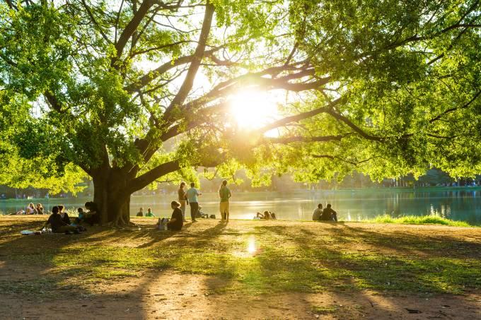 Tarde de sol no lago artificial do Parque do Ibirapuera em Sao Paulo Brasil