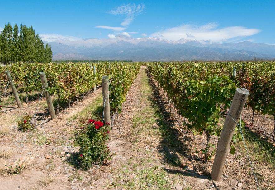 As vinícolas de Mendoza são a grande atração da cidade: há diversos lugares para passear pelos parreirais e degustar os bons vinhos argentinos. A cidade é a principal região vitivinícola do país