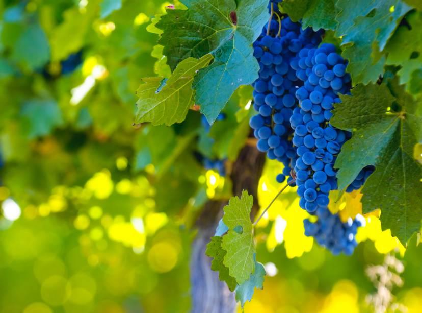 Uvas como Malbec, Cabernet Sauvignon, Tempranillo e Chardonnay tornaram os produtos de Mendoza bem apreciados mundo afora