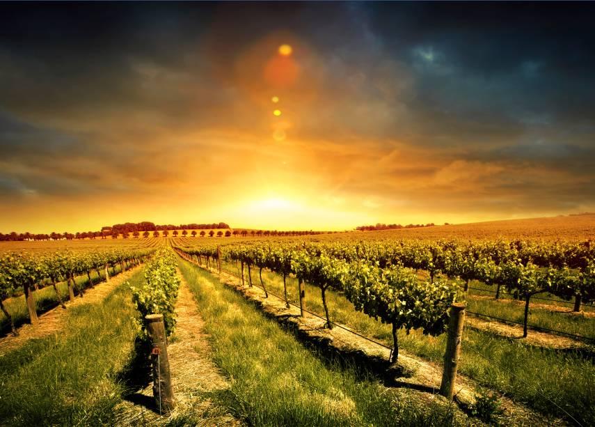 O Vale Barossa, localizado a 86 quilômetros de Adelaide, é a mais famosa região produtora de vinho do estado