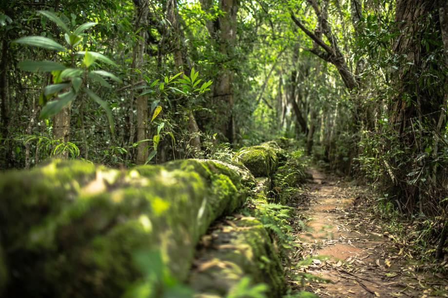 Trilha do Bosque Mãe d'Água, emTiradentes (MG)