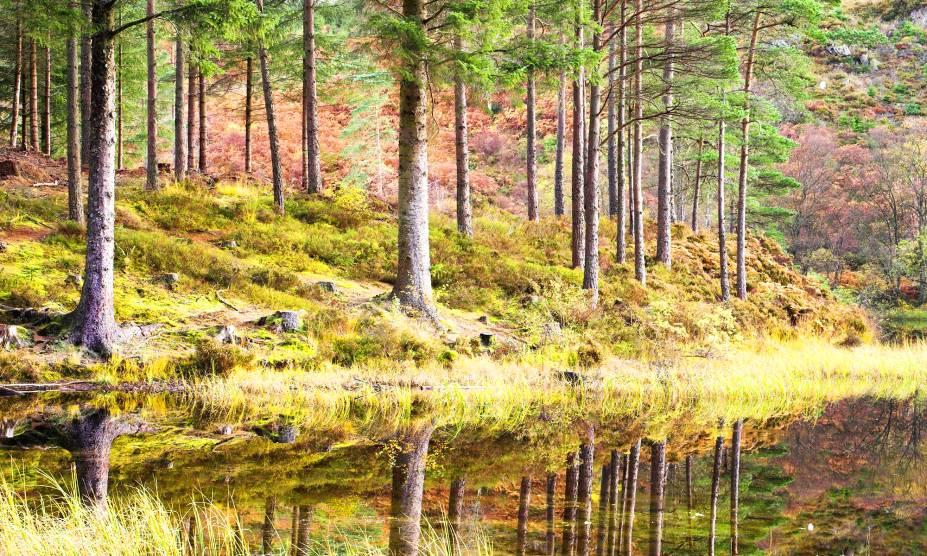 """Distante a apenas uma hora da civilização, o parque nacional Loch Lomond & Trossachs, na <a href=""""http://viajeaqui.abril.com.br/paises/escocia"""" rel=""""Escócia"""" target=""""_blank"""">Escócia</a>, concentra grande parte da vida selvagem do país. Há lontras, cervos, águias marinhas e outras espécies únicas. Além dos bichos, as montanhas e as comunidades rurais do entorno do parque acolhem os visitantes com muita hospitalidade, caminhadas, passeios a cavalo e escaladas <strong><a href=""""http://viajeaqui.abril.com.br/materias/florestas-encantadas-pelo-mundo#11"""" rel=""""SAIBA MAIS"""" target=""""_blank"""">SAIBA MAIS</a></strong>"""