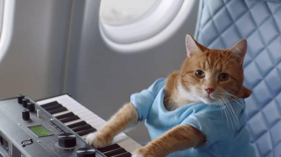 """<strong>Keyboard Cat</strong>                    O gato Fatso foi filmado lá em 1984 pelo seu dono, Charlie Schmidt, em uma <a href=""""https://www.youtube.com/watch?v=J---aiyznGQ"""" rel=""""cena inusitada para gatos"""" target=""""_blank"""">cena inusitada para gatos</a>: tocando teclado e usando uma camiseta azul. Charlie manipulou as patas de Fatso, dando a impressão de que o gato era mesmo uma fera dos teclados. Ô loco, meu! Assim como outros memes do mundo, o Keyboard Cat foi reproduzido em <a href=""""https://www.youtube.com/watch?v=xSE9Qk9wkig"""" rel=""""várias ocasiões"""" target=""""_blank"""">várias ocasiões</a>. Em 2009, o ator <a href=""""https://twitter.com/aplusk/status/1707094821"""" rel=""""Ashton Kutcher favoritou o vídeo"""" target=""""_blank"""">Ashton Kutcher favoritou o vídeo</a>"""
