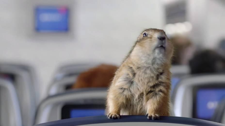 """<strong>Dramatic Chipmunk</strong>                        Bastou um esquilo se virar rapidamente e fixar seu olhar na câmera para ele ser um sucesso mundial. A primeira aparição do vídeo do bichinho foi em um programa japonês. Em 2007, a cena foi publicada no <a href=""""https://www.youtube.com/watch?v=a1Y73sPHKxw """" rel=""""Youtube"""" target=""""_blank"""">Youtube</a> e ganhou o mundo"""