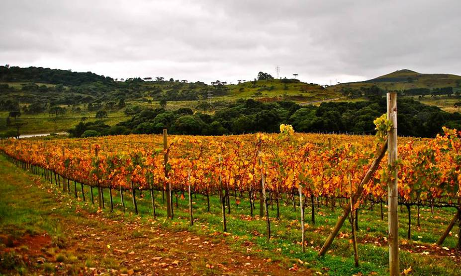 """<strong><a href=""""http://www.villaggiobassetti.com.br/"""" rel=""""32. Villaggio Bassetti"""" target=""""_blank"""">32. Villaggio Bassetti</a> (<a href=""""http://viajeaqui.abril.com.br/cidades/br-sc-sao-joaquim"""" rel=""""São Joaquim"""" target=""""_self"""">São Joaquim</a>, <a href=""""http://viajeaqui.abril.com.br/estados/br-santa-catarina"""" rel=""""Santa Catarina"""" target=""""_self"""">Santa Catarina</a>, <a href=""""http://viajeaqui.abril.com.br/paises/brasil"""" rel=""""Brasil"""" target=""""_self"""">Brasil</a>) </strong>    A receptividade é o forte dessa vinícola, marcada por vinhos bem produzidos. São dois hectares para uvas Merlot e dois de Cabernet Sauvignon, com resultado final bem satisfatório. A degustação acompanha refeições, com boas harmonizações que incluem Rosé com quejo colonial ou Sauvignon Blanc com truta, por exemplo. A sensação que os anfitriões deixam no visitante é o de pertencer ao lugar e às belas paisagens no entorno."""