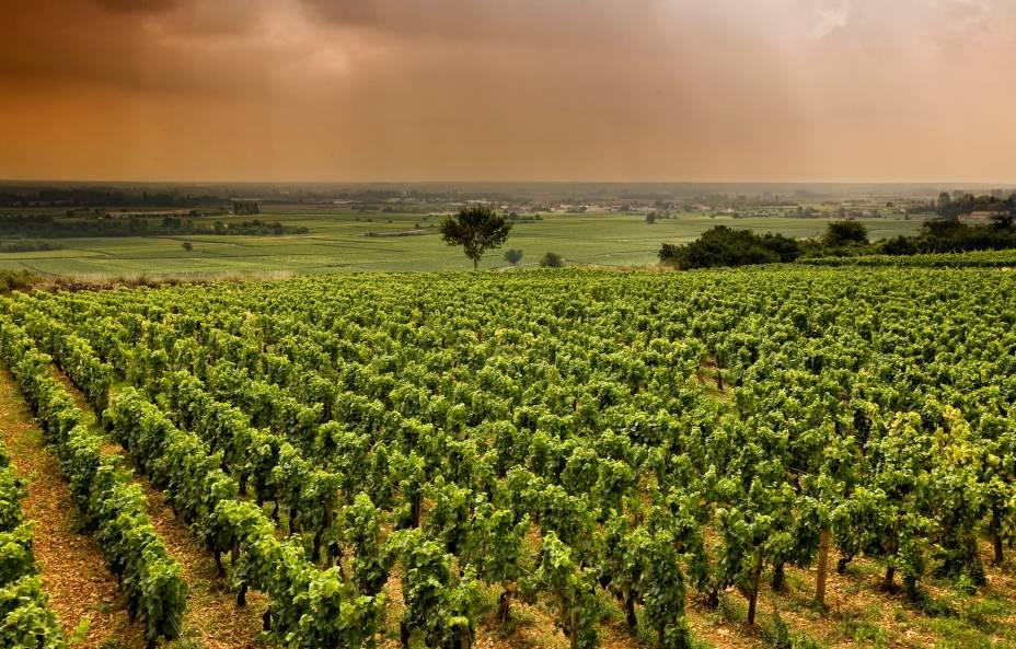 """<strong>Borgonha, <a href=""""http://viajeaqui.abril.com.br/paises/franca"""" target=""""_self"""">França</a></strong>A história conta que os povos celtas já produziam vinhos na região quando os romanos a invadiram, por volta do século 2 d.C. Não à toa: a Borgonha é um dos lugares mais tradicionais na produção e no consumo da bebida, dividindo as atenções com os vinhos de Bordeaux. Pequenas propriedades familiares caracterizam os cenários locais, que produzem vinhos brancos em larga escala<em><a href=""""http://www.booking.com/region/fr/route-des-vins-de-bourgone.pt-br.html?aid=332455&label=viagemabril-vinicolas-da-europa"""" target=""""_blank"""" rel=""""noopener"""">Veja preços de hotéis em Borgonha no Booking.com</a></em>"""