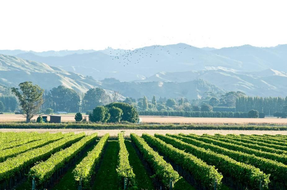 As vinícolas da região de Gisborne são conhecidas pela produção do chardonnay de alta qualidade