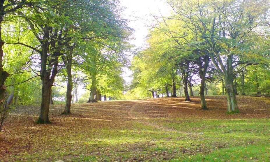 """<strong>7. Floresta de Wychwood, Oxfordshire, <a href=""""http://viajeaqui.abril.com.br/paises/reino-unido?iframe=true"""" rel=""""Reino Unido"""" target=""""_self"""">Reino Unido</a></strong>                            Localizada em uma pequena área rural do condado de Oxforshire, essa floresta já ocupou uma extensa região no passado – favorável à agricultura. Hoje, seus pequenos vestígios contam mitos e lendas que assustam moradores e turistas, como a de mãos tocando os ombros de uma pessoa solitária ou o barulho de cavalos invisíveis trotando. Um dos casos mais famosos é o de Amy Robsart, esposa do Conde de Lancaster: depois de misteriosamente quebrar o pescoço e morrer, a jovem mulher teria aparecido para o marido enquanto ele caçava no bosque, anunciando que ele se juntaria a ela em apenas dez dias. E não é que o cara adoeceu e cumpriu a profecia?! Dizem que até hoje o fantasma dela ronda a floresta para anunciar o mesmo destino para alguns pobres desafortunados. Na dúvida, vá equipado com água benta."""