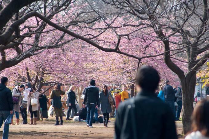Parque Yoyogi com cerejeiras floridas, Tóquio, Japão