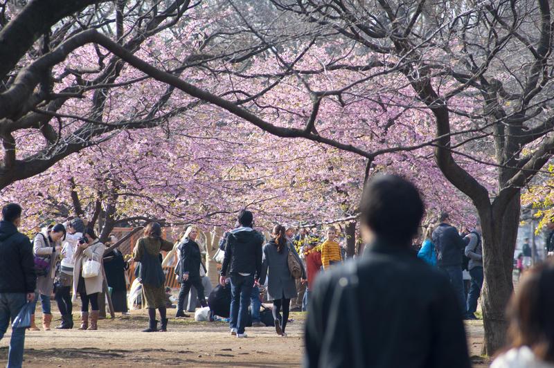"""<strong>1. <a href=""""http://viajeaqui.abril.com.br/estabelecimentos/japao-toquio-atracao-parque-yoyogi"""" rel=""""Yoyogi Park"""" target=""""_blank"""">Yoyogi Park</a></strong>    Florido pelas cerejeiras na primavera (fim de março), o enorme<strong>Yoyogi Park</strong>tem largas alamedas de pedriscos, boas para caminhada. Ornamento clássico do lugar, fileiras de barris identificados com ideogramas guardam saquês de um lado e, do outro, vinhos presenteados ao Japão por toda a Borgonha"""