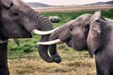 Parque Amboseli Tanzânia