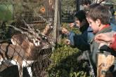 Pibes e cervos no zoológico de Buenos Aires