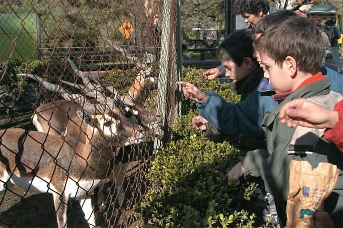 pibes-e-cervos-no-zoologico-de-buenos-aires.jpg