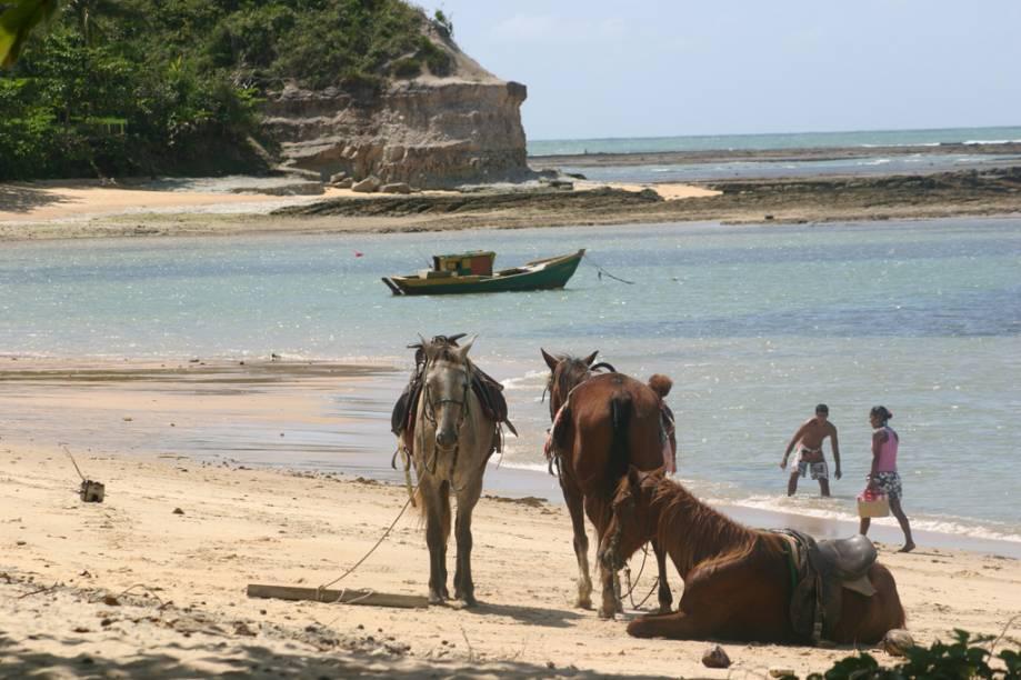 Cavalos na Praia do Espelho, distrito de Porto Seguro