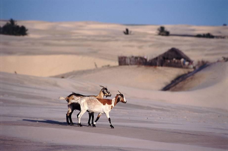 """Caminhar pelas dunas do <a href=""""http://viajeaqui.abril.com.br/estabelecimentos/br-ma-barreirinhas-atracao-parque-nacional-dos-lencois-maranhenses"""" rel=""""Parque Nacional dos Lençóis Maranhenses"""" target=""""_blank"""">Parque Nacional dos Lençóis Maranhenses</a> formadas pelos ventos que sopram do mar é uma experiência inesquecível"""