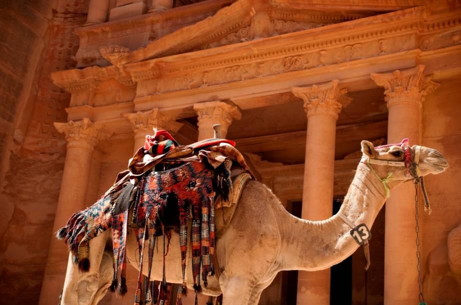 Dromedários foram fundamentais nas caravanas comerciais dos nabateus. Hoje, no entanto, apesar de ainda serem importantes para os povos nômades, sua função na área de Petra está mais restrita a alegrar turistas com boas fotos e passeios