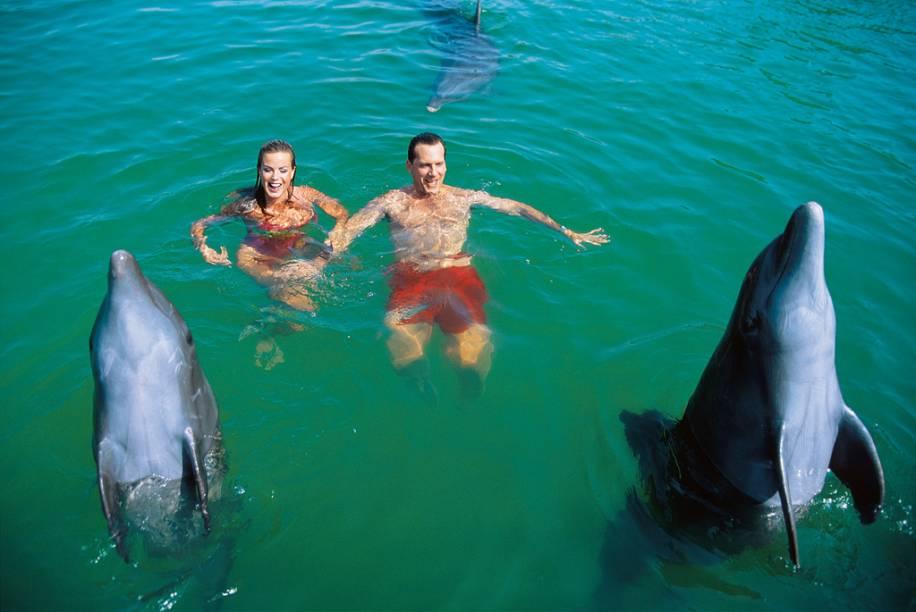 Em diversos parques aquáticos e resorts de Cancún é possivel nada com golfinhos