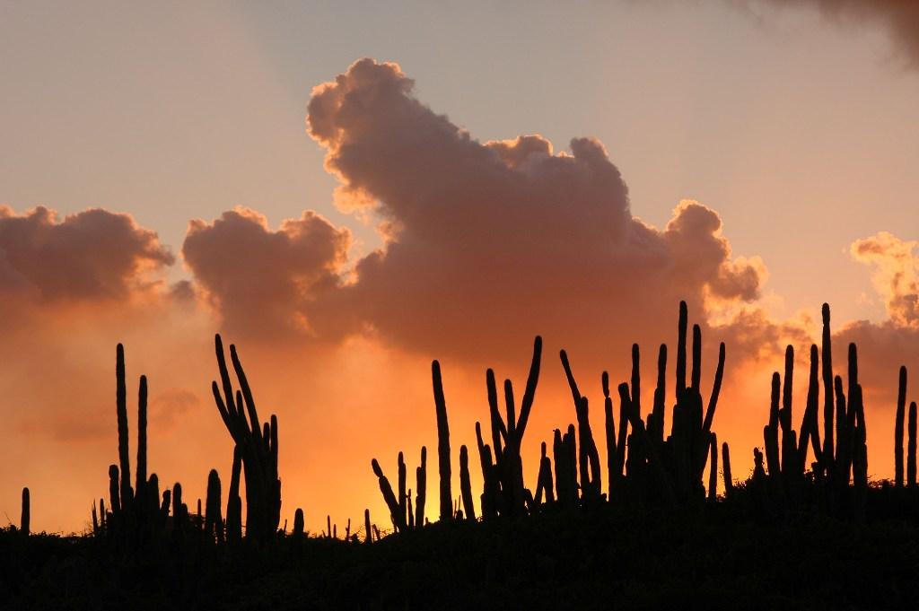 Aruba possui um clima semi-árido em seu interior, resultado dos baixos índices de pluviosidade da região. Cactos são uma constante em sua paisagem.