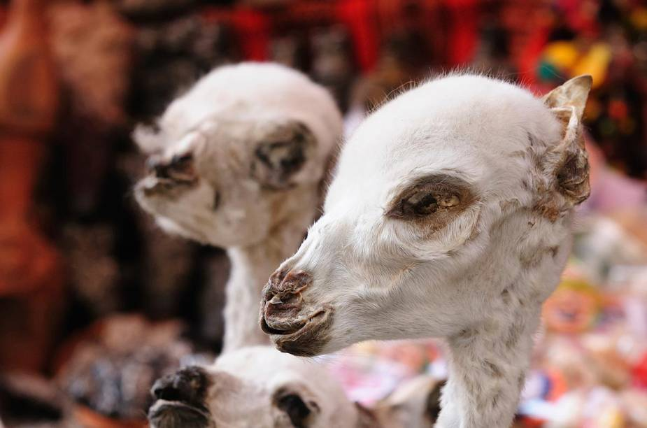 No centro de La Paz, está o Mercado das Bruxas - o local vende objetos místicos para a população indígena da cidade, como fetos de lhamas (foto)