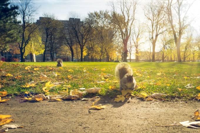 Tem Montreal esbanjando lindeza em todas as estações do ano (Foto: Lima Pix/Flickr/Creative Commons)