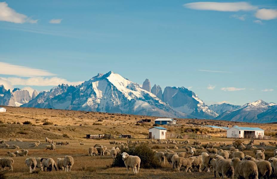 As ovelhas observam quem observa as Torres del Paine se elevando no meio do nada: um sonho de aventura
