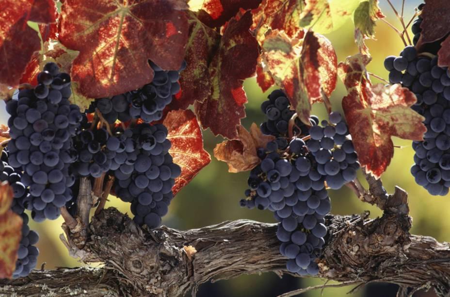 Napa Valley, a 1 hora de San Francisco, abriga cerca de 150 vinículas