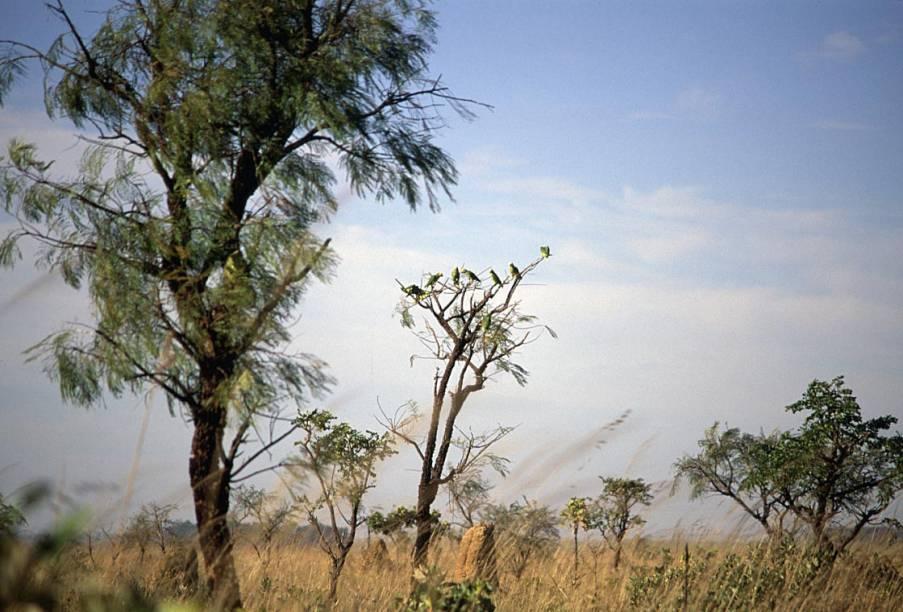 Com 800 espécies de plantas, 300 de aves e mamíferos sob o risco de extinção, o Parque Nacional das Emas (GO) é considerado Patrimônio Natural da Humanidade pela Unesco