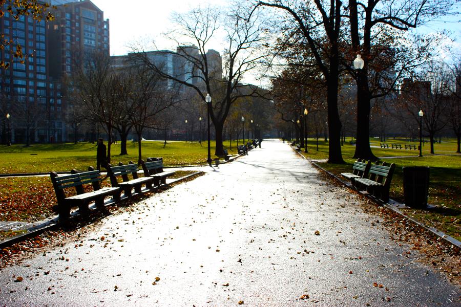 O Boston Commom é considerado o parque mais antigo dos Estados Unidos. Por aqui, diversos esquilos surgem para posar para as lentes de fotógrafos amadores