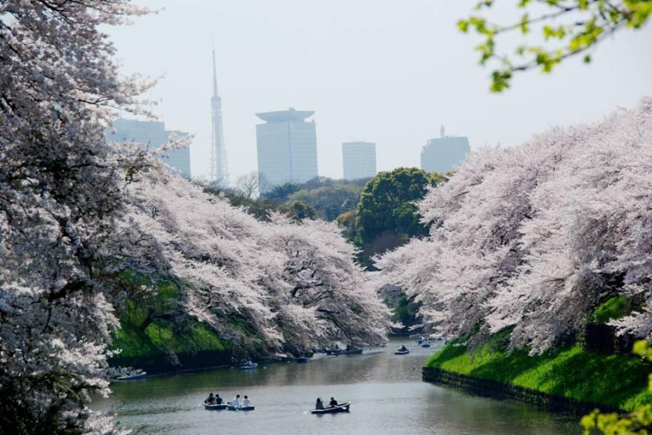 Casais se divertem nos fossos do antigo Castelo de Edo, o atual Palácio Imperial de Tóquio, repleto de cerejeiras em flor