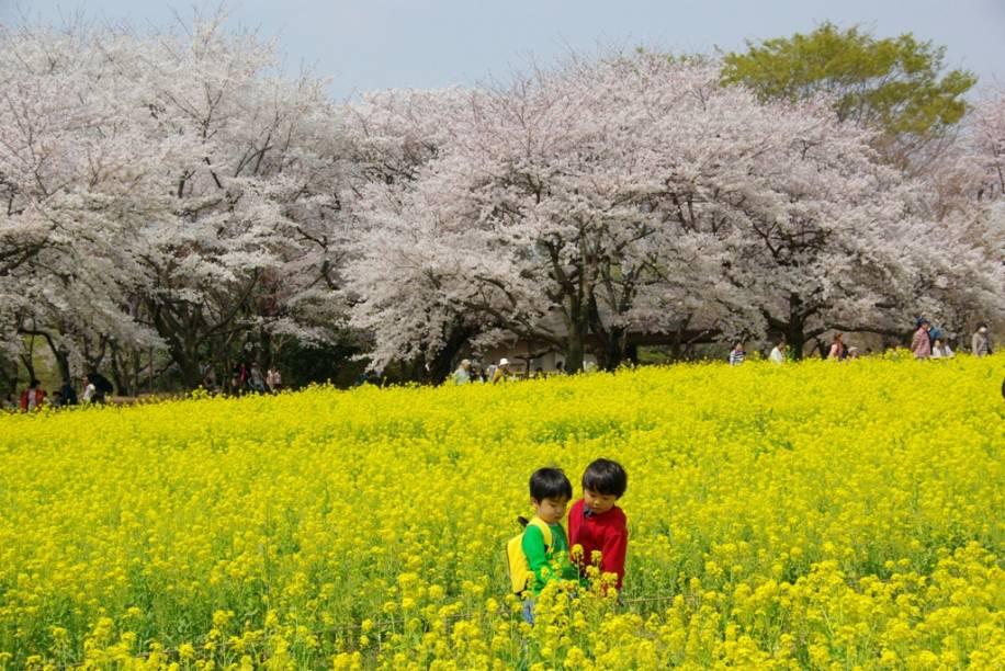 Crianças brincam em campos floridos no parque Showa Kinen, em Tóquio