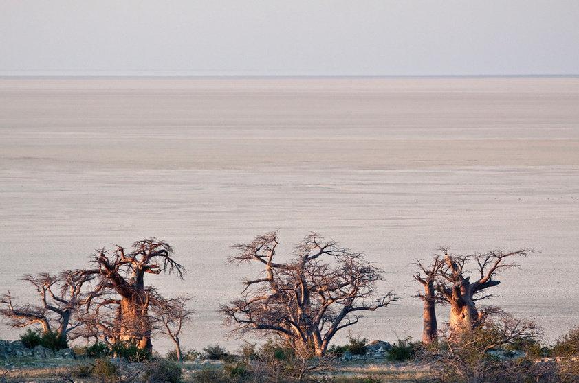 Baobás de Maun, na Botsuana (Foto: Thinkstock)