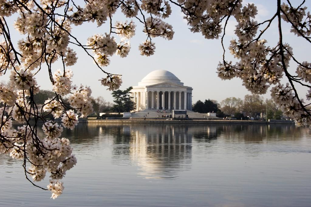 Flores de Cerejeira cobrem o parque em frente ao Jefferson Memorial, em Washington