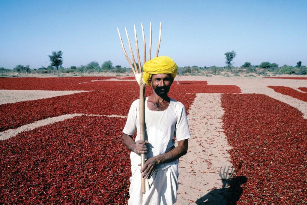 Agricultor em plantação de pimenta na Índia (foto: Bread for the World)