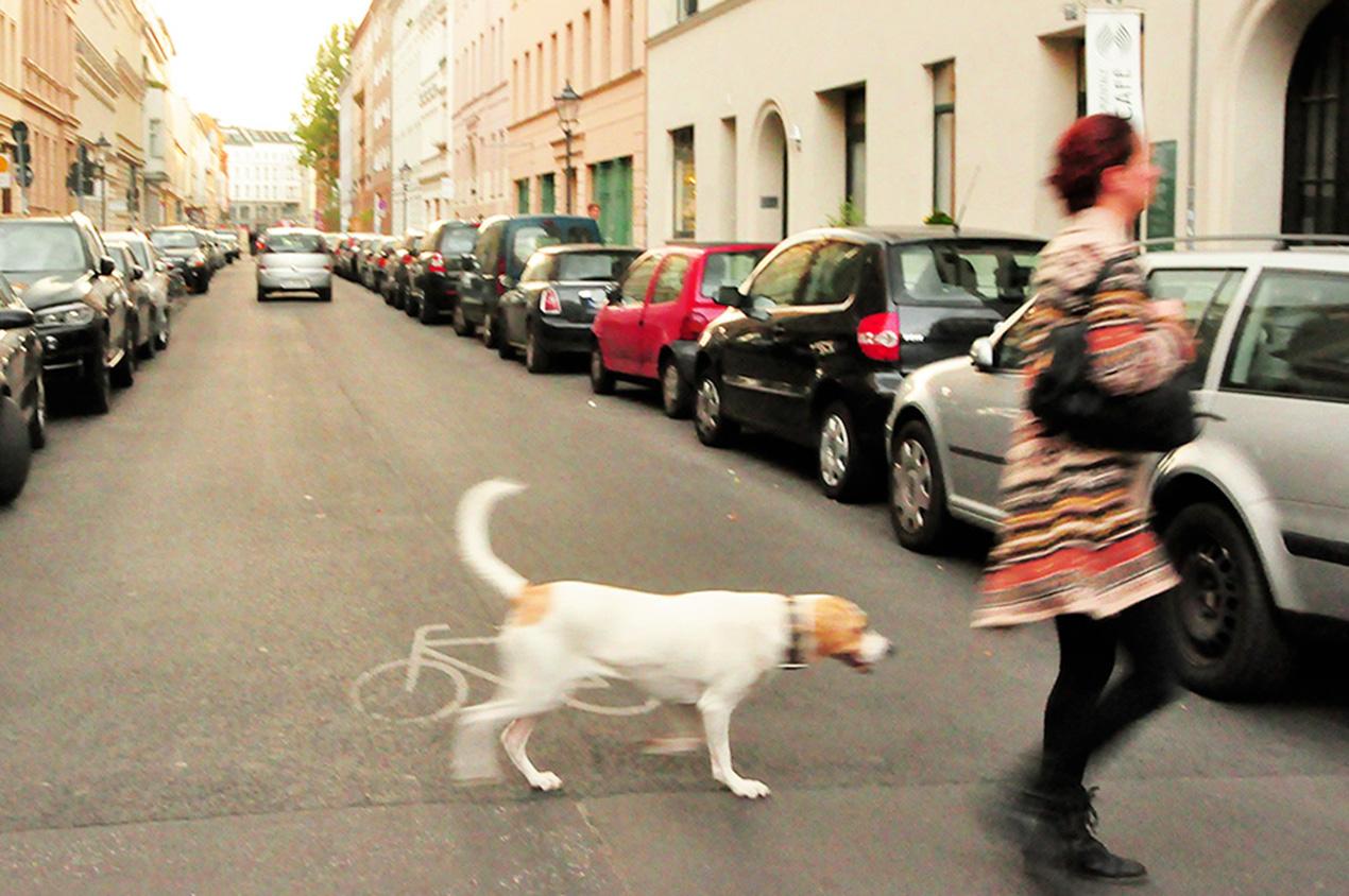 Os dogs mais educados da face da terra [foto: Ana Claudia Crispim]