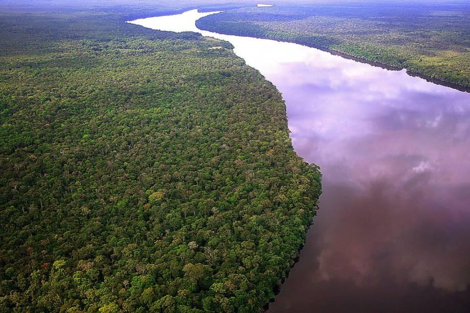 Vista aérea da floresta Amazônica na região do rio Negro, no Amazonas