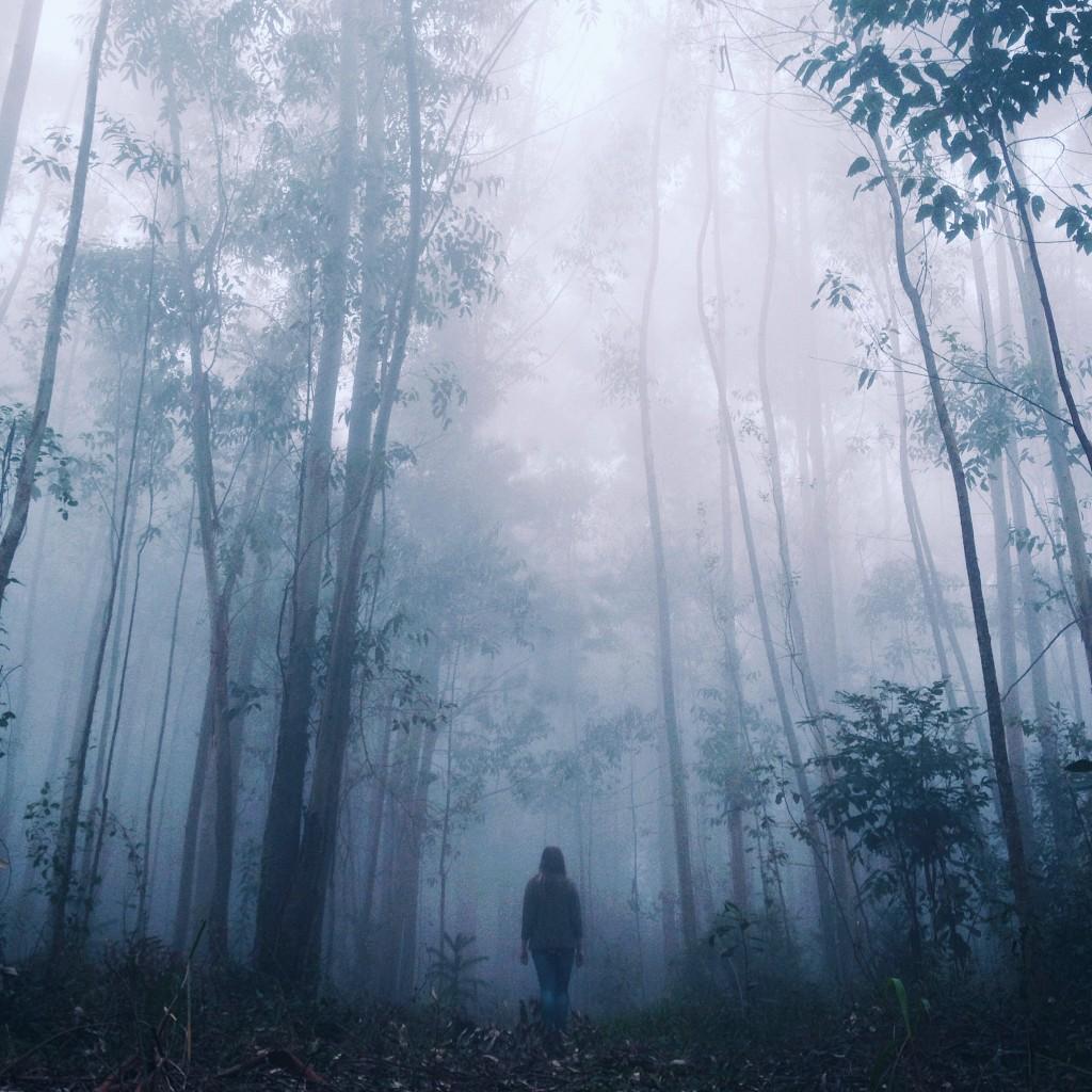 Bosque de Cerro Branco