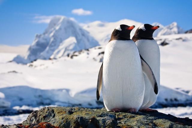 Não é tão difícil visitar o continente mais gelado do planeta: a terra dos pinguins, focas e baleias-jubarte pode ser conhecida em uma viagem de cruzeiro. Normalmente, eles partem da Patagônia, na Argentina e no Chile, quando é verão por aqui. No inverno, é muito perigoso navegar entre os icebergs. Outros humanos que visitam a Antártica são pesquisadores de diversas nacionalidades - e só. (foto: Thinkstock)