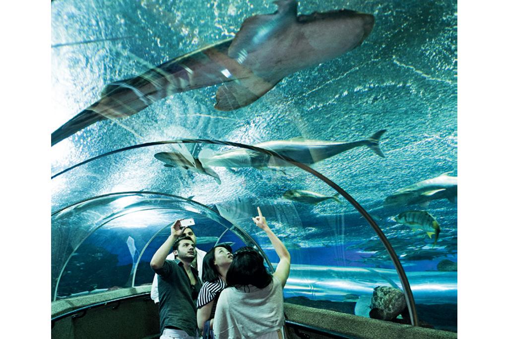 Aquário do Marine Life Park, em Cingapura