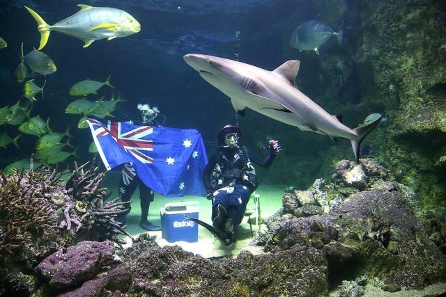 Até o aquário de Sydney comemorou o feriado, com mergulhadores numa boa ao lado de tubarões (foto: Getty Images)