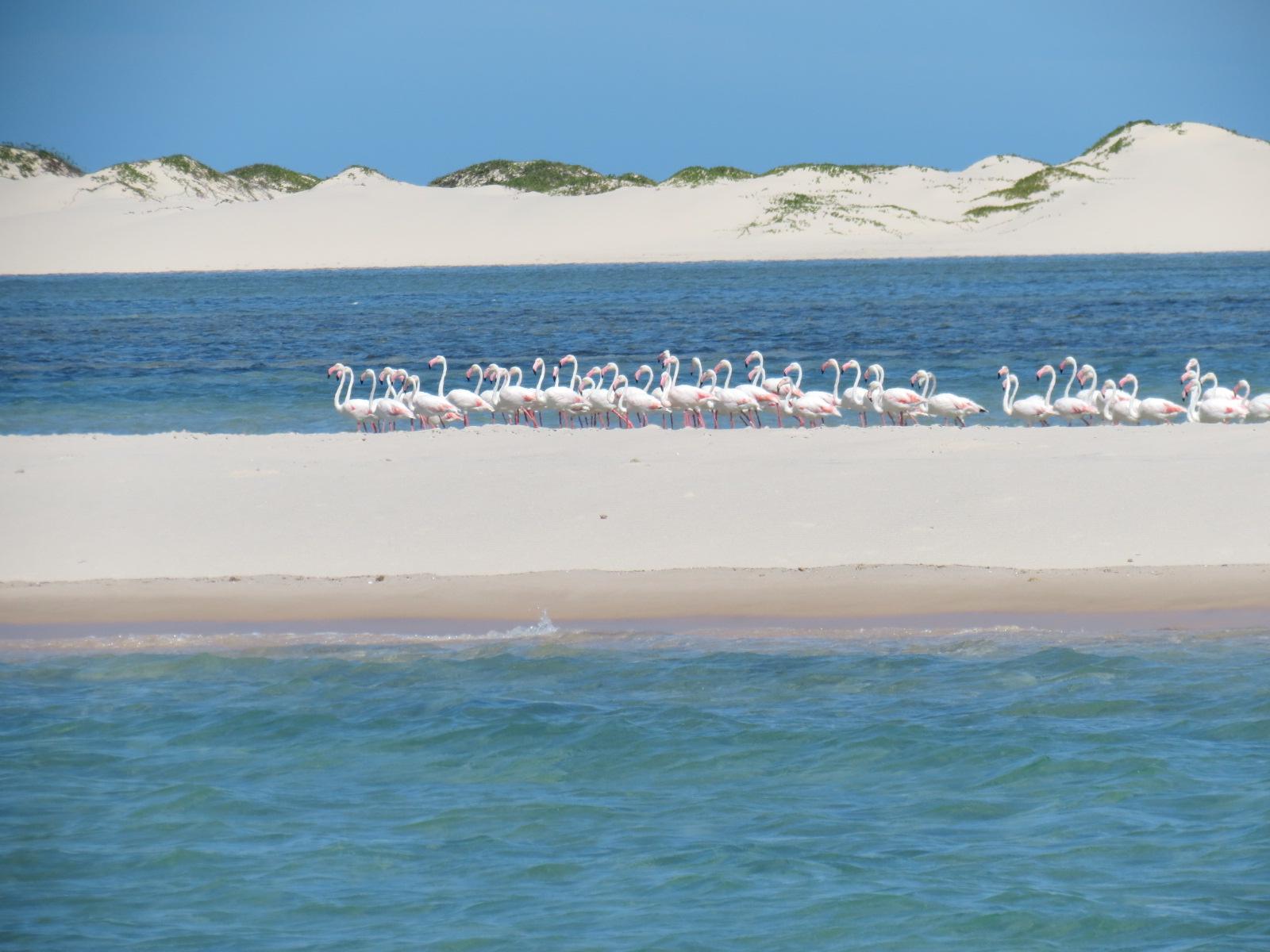 Flagra: flamingos!