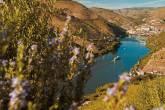 Barcos também levam turistas pelo Rio Douro, em Portugal