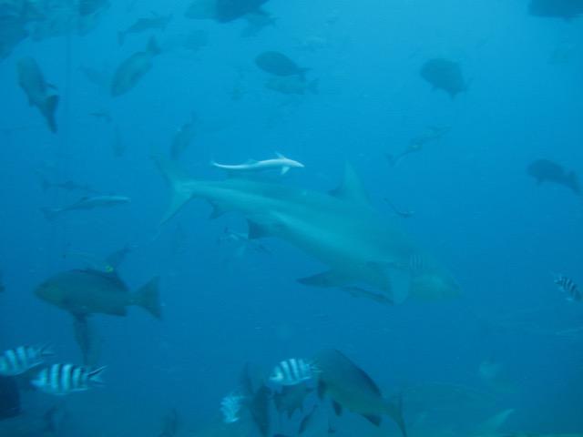 """""""Como alguém vai proteger aquilo que não conhece de perto?"""" - Jean-Michel Cousteau"""