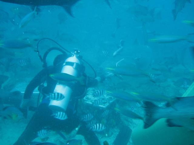Um dos malucos da Aqua Treck oferecendo um petisco a um tubarão-touro