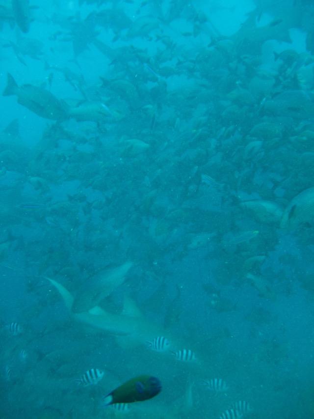 Quem é quem? Nem no aquário de Dubai eu vi tanto peixe junto.