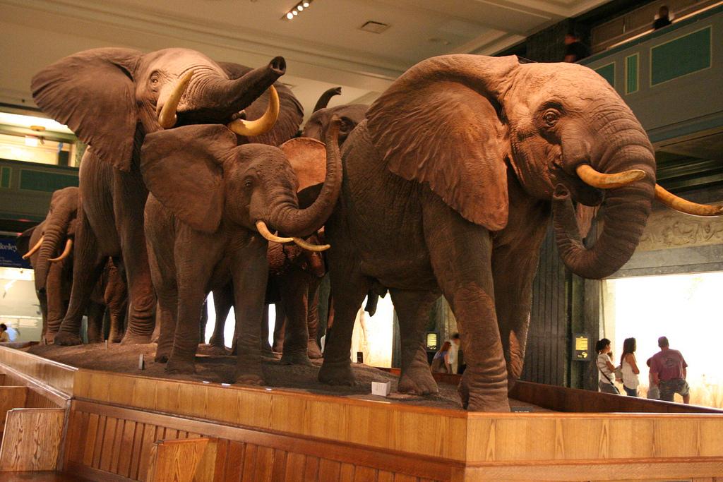 American Natural History Museum, Nova York, EUA